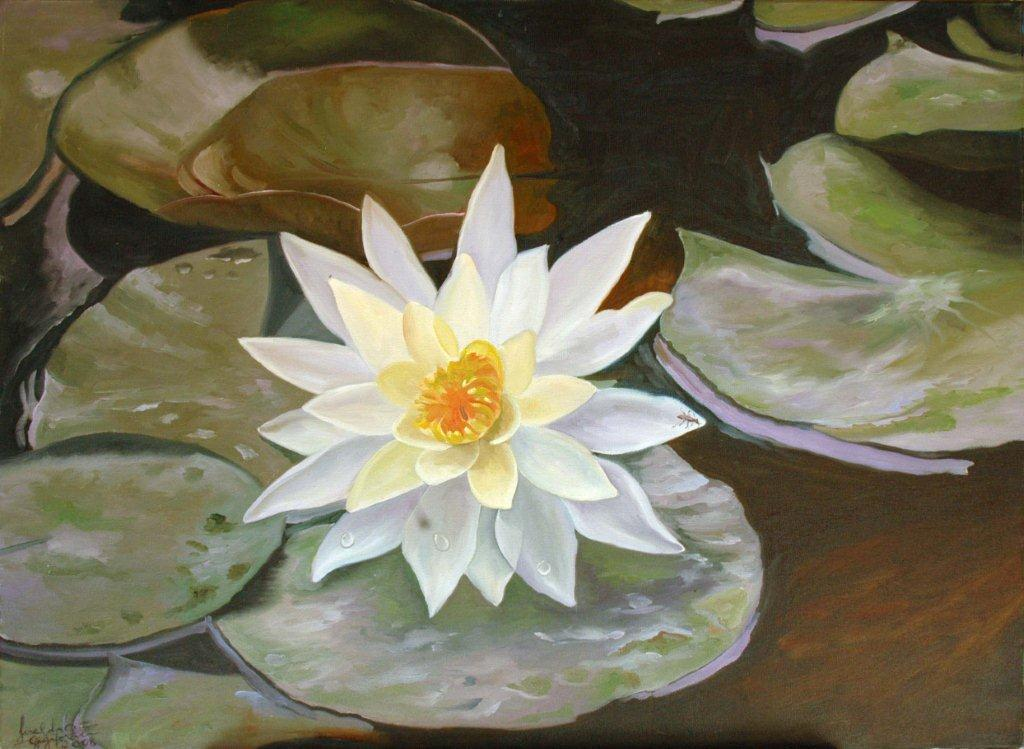 9-yellow-water-lily-nymphaea-mexicana-symbol-flower-botanical-garden-s-paulo-brazil