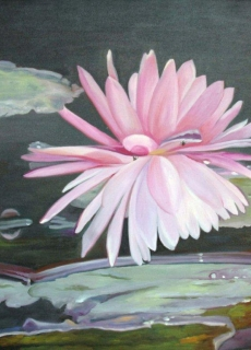 12-pink-water-lily-charm-the-charm-of-lake-of-the-nymphs-where-can-be-admired-in-the-botanical-garden-of-s-paulo-brazil